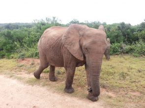 Cape of Storms to Addo Elephant National Park